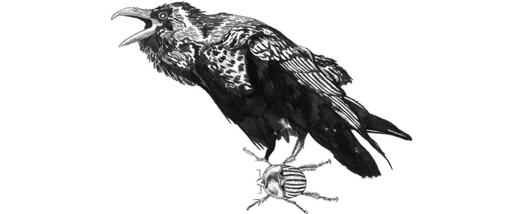Santiago Robles, Drawing. Ink, Dibujo, Gráfica, Graphic, The Raven, El cuervo, Nevermore, Nunca más