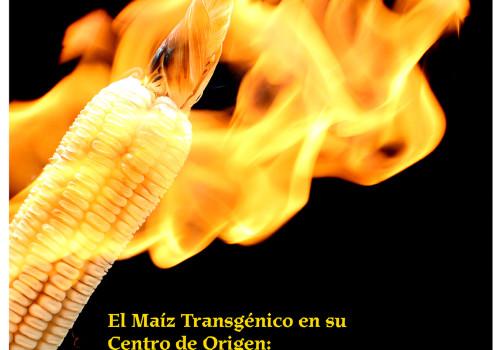 Santiago Robles, Diseño, Diseño de cartel, Ilustración, Design, Poster Design, Illustration, Maíz Transgénico, Transgenic maize, Elena Álvarez-Buyllá, UCCS, UNAM