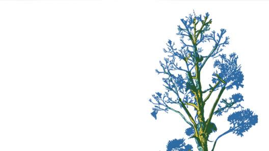 SantiagoRobles, Walk, ArteyEntorno, Landscape, Deriva, ZonasdeTransición, ERROR, Puebla, Atoyac, Art, Arte, VisualArt, ArteContemporaneo, Grafica, SARA, Riso, Risograph, Risografia,