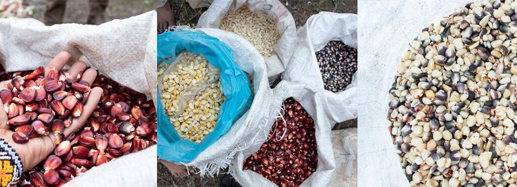 arte, santiagorobles, maíz, chahuiztle