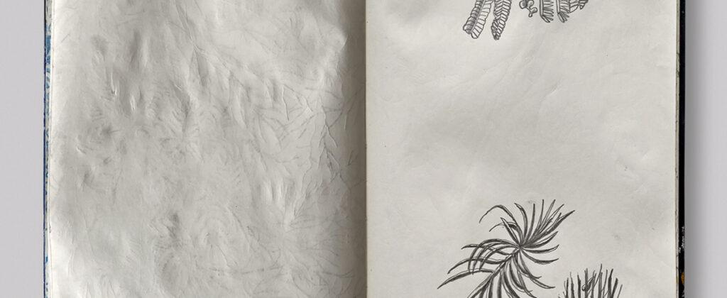 SantiagoRobles, dibujo, draw, drawing, dibujando, graphic, grafito, lapiz, sketch, apunte, libreta, paisaje, landscape, plant, beach, art, contemporaryart, artecontemporaneo,